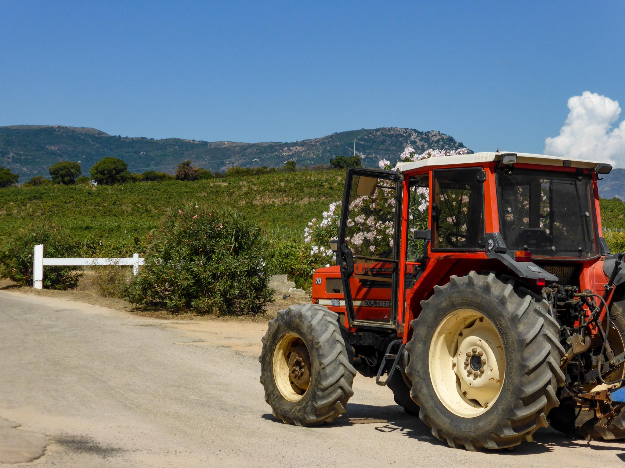 Kitschige Kalenderromantik in den Weinbergen der Peraldi Kelterei. Grundsätzlich hat uns Korsika landschaftlich sehr gut gefallen. Da lässt es sich aushalten. Wir würden womöglich Korsika als Urlaubsziel ins Auge fassen, wenn... ja wenn nicht ewig das Schiff locken würde.